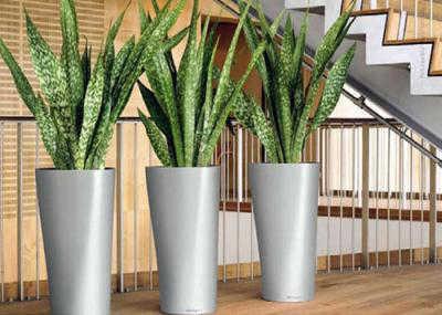 Decora tu oficina con feng shui y encuentra la armon a for Plantas para interiores feng shui
