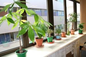 plantas-oficina05